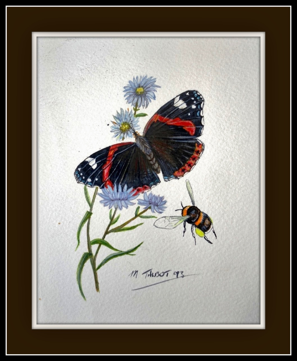 my-art-red-admiral